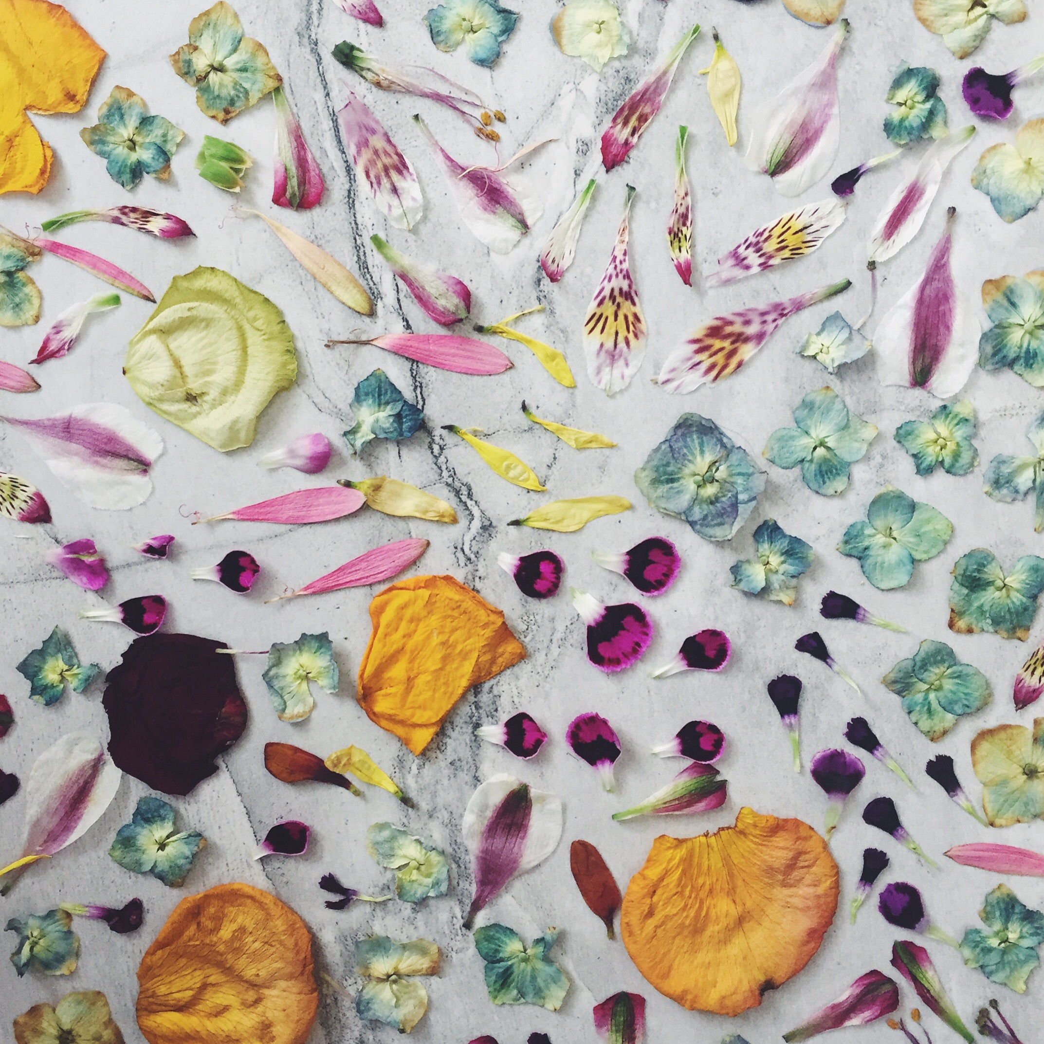 Read dried flowers for temporary tattoos